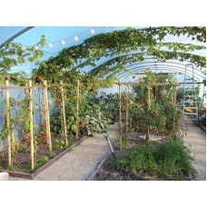 Polytunnel Growing Winter Workshop (Saturday 13th November 2021) Klaus Laitenberger