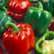 Organic Peppers Sweet California Wonder