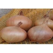 Organic Onion Sturon
