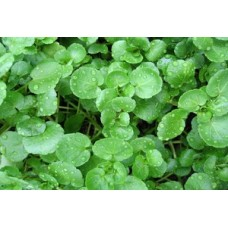 Organic Cress Watercress