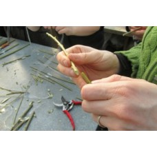 Grafting Workshop - Saturday February 24th 2018 with Phil Wheal