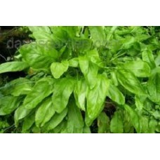 Organic Sorrel, French