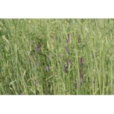 Organic Rye/Winter Vetch