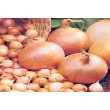 Organic Onion Giant Stuttgart