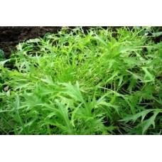 Organic Oriental Mizuna