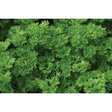 Organic Parsley Green Perle