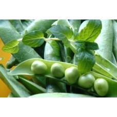 Organic Pea Kelvedon Wonder