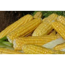 Organic Sweetcorn True Gold