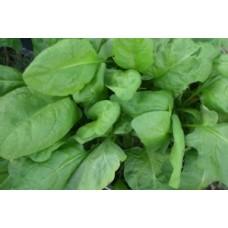 Organic Spinach Annual Matador
