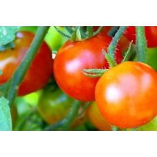 Organic Tomato Douglas F1