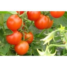 Organic Tomato Koralik