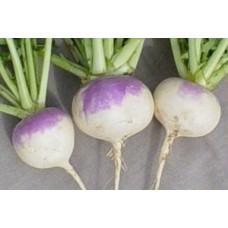 Organic Turnip White Globe