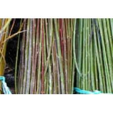 Organic Willow Lancashire Dicks