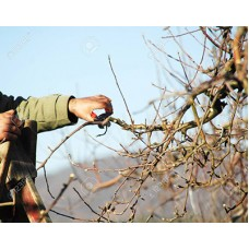 Winter Fruit & Pruning (Sunday 7th November 2021) Phil Wheal