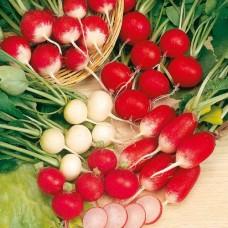Organic Radish Mixed