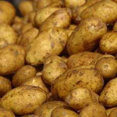 Organic Record Potatoes NEW