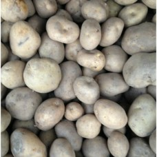Organic Sante Potatoes