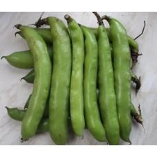 Organic Broad Beans Hangdown Green