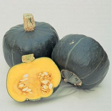 Organic Squash Buttercup