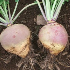 Organic Swede Lomonde