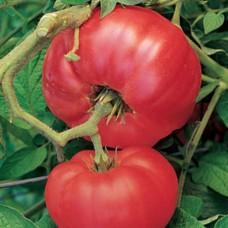 Organic Tomato Brandywine