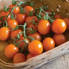Organic Tomato Clementine
