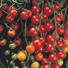 FREE Event - Tomato Day Sunday August 22nd, 2021  12 - 4pm