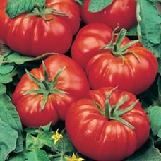 Organic Tomato Marmande
