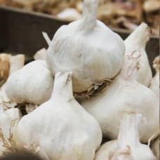 Organic Garlic Vallelado (Autumn Planting) 250g= approx 4 bulbs