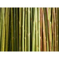 Organic Biomass Willow (Variety Unknown)
