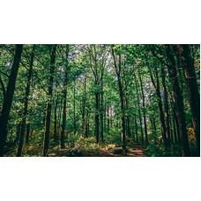 Woodland Management Workshop (Sunday May 10th)